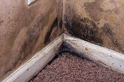 mold and flooding